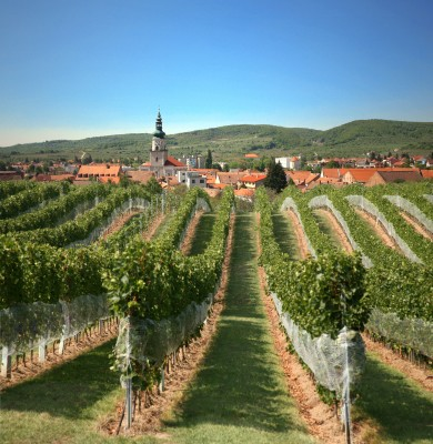 modra.vinohrady